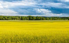 Yellow Fields by Leszek Dudzik on 500px