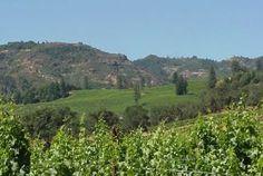 Flying Horse: Vineyards