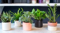 These 4 Plants Can Help Solve Your Sleep Problems !