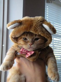 Leo would eat me before he'd let me put him in a bear suit . . . but how cute is this kitty?!