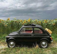 Classic Car Shows Fiat Cinquecento, Fiat 500c, Bmw Classic Cars, Classic Car Show, Retro Cars, Vintage Cars, Chrysler Convertible, New Fiat, Fiat 124 Spider