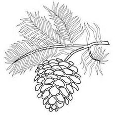 Pine Cone Coloring Pages | Download Coloring Page