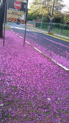 Chão de flores ipe roxo