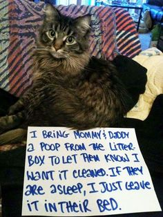 An epic gallery of cat shaming pictures that prove these cats are the naughtiest in the world. A hilarious cat shaming picture gallery. Funny Cat Memes, Funny Cat Videos, Funny Animal Pictures, Funny Cats, Funny Animals, Cute Animals, Animal Funnies, Animal Pics, Animal Quotes