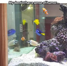 funny-dentist-fishbowl-Nemo-characters My Dentist, Funny Dentist, Funny Pins, Funny Memes, Funny Stuff, Funny Cute, The Funny, That's Hilarious, Disney Love