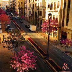 Beirut in Pink  بيروت يالزهر By Georges Aj #WeAreLebanon #Lebanon