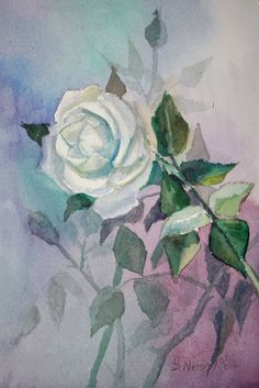 White rose, original watercolor painting 10 X 7 in, sale