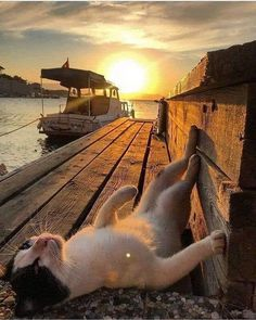 summer is coming - Süße tiere - Katzen Beautiful Cats, Animals Beautiful, Beautiful Sunset, Cute Funny Animals, Funny Cats, Animals And Pets, Baby Animals, Cat Life, Crazy Cats
