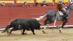 Abaixo-assinado · Fiesta de la Vendimia-Ayto. Requena: Ayto Requena- Fiesta de la Vendimia. Si a la fiesta, no al maltrato animal de los toros · Change.org