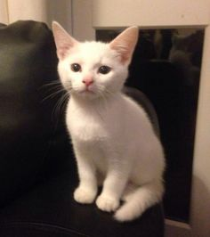 These little cuties were sent in by Anna Whitworth:  Reminds me of a little kitten I used to have.