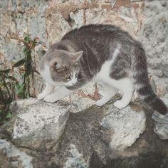 #portfairy #cat #catsofinstagram by yaynix http://ift.tt/1UokfWI