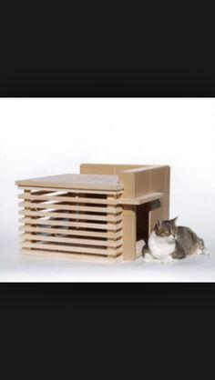 Design cathouse
