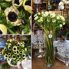 Flowershop Anemonka