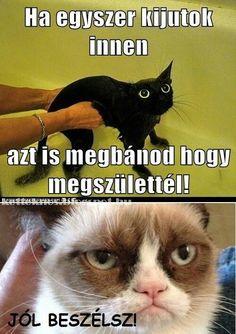 Funny Cats, Funny Animals, Grumpy Cat Humor, Haha, Funny Pictures, Jokes, Fanny Pics, Husky Jokes, Ha Ha