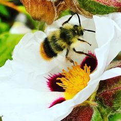 Bee, Photo And Video, Videos, Instagram Posts, Animals, Animais, Animales, Animaux, Animal
