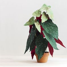 It all started because I wanted a fiddle leaf fig tree in our very dark living room. I knew a live one would never survive so I made one using paper, paper mache, wood dowels, and paint. It was rewarding and fun to make! It has been a challenge and a treat to discover what other plants I can craft out of paper.