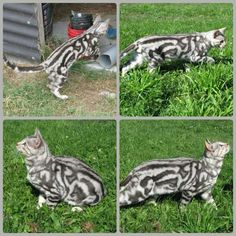 Silver Marble Bangle cat