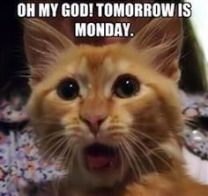 OMG Tomorrows Monday sunday sunday quotes happy sunday tomorrows monday sunday humor sunday quote happy sunday quotes funny sunday quotes