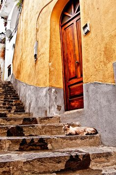 Stray Cat on steps in Positano, Italy