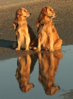 These are not my dogs but this is a beautiful photo! Maybe someday we can get them to be this calm at the beach :-)
