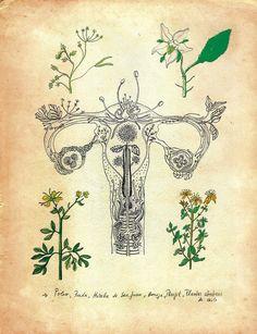 la-xingada: barcosytuneles: Poleo, Ruda, Hierba de san Juan, Borraja, Perejil; Plantas Abortivas en chile.Pro Choice. Plantas Abortivas.