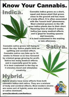 Indica vs Sativa | Marijuana Information & Infographics | Pinterest