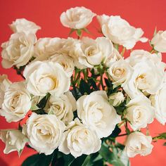 """Meet White Majolica. One our lovely white spray rose varieties whose blooms fully open giving it a delicate """"garden rose"""" feel."""
