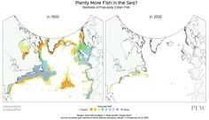 A visualization of the state of Atlantic fish stocks showing the biomass of popularly eaten fish in the Atlantic in 1900 (left) and 2000 (right). Tragedy of the commons.