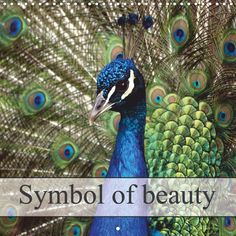 Symbol of beauty - CALVENDO calendar - #birds #peacock #photography #calendar #calvendo