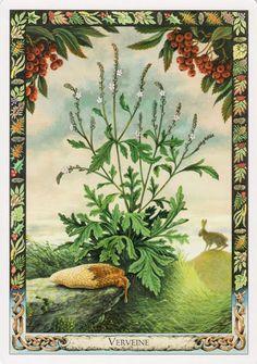Lá Vervain – Druid Plant Oracle bài tarot