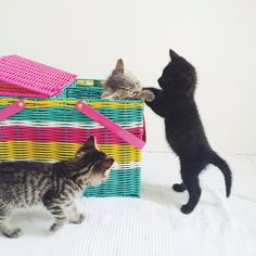 Photo by Jen Gotch. Picnic basket by Oh Joy for Target. Photo courtesy pf Oh Joy! blog from the entry titled 'kittens on a wednesday'.