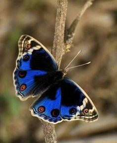Butterfly by la abu rechal