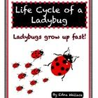 Children love ladybugs!  And learning about them is a great way to get them interested in science because they're such amazing little creatures.  I...