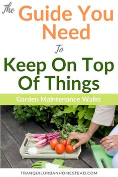 Garden Maintenance Walk: The Best Way To Keep on Top of Things : Do you want to keep on top of what is going on in your garden? Taking a regular garden maintenance walk will help you grow better vegetables and fruit. Prune Fruit, Backyard Layout, Japanese Beetles, Garden Storage Shed, Plant Diseases, Garden Maintenance, Urban Homesteading, Garden Pests, Grow Your Own Food