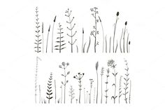 Sketchy Wild Field Flowers and Grass by Popmarleo Shop on Creative Market