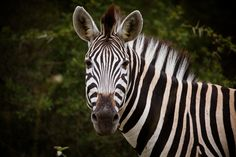 Yoann JEZEQUEL - Safari wildlife looking
