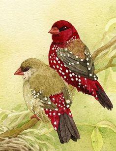vögel mit wasserfarben malen                                                                                                                                                                                 Mehr