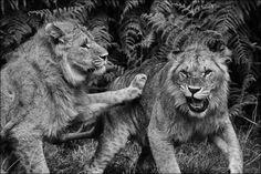 47+ Wild Shots Of The Wild World: Photo Contest Finalists Blog - ViewBug.com