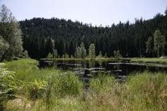 In Baiersbronn, Relikte aus der Eiszeit    Einst soll es rund 60 Karseen in der Baiersbronner Region gegeben haben, so viele wie sonst niergends in Mitteleuropa. Heute steht diese Gewässerspezies kurz vor dme Aussterben. Um Baiersbronn gibt es dennnoch immerhin ein halbes Dutzend der mit Wasser gefüllten eizeitlichen Relikte. Ihren Ursprung haben die Karseen in der Würmeiszeit, als sich kleine Hängegletscher tief in den Buntsandstein einhobelten und dabei die heute steilen Karwände schufen…