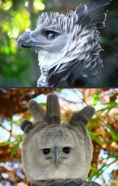 Humor with birds! #funny #photo #image #good side #humor #birds #hilarious #laugh #smile Animal Pictures, Cool Pictures, Funny Pictures, Cat Memes, Funny Memes, Hilarious, Pretty Mugs, Weird Creatures, I Said