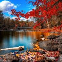 Autumn-Forest-Scenery