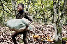 Bambino lavora in una piantagione di cacao