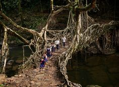 """En root to school"": At around 8:30am every weekday these friends make their way through the jungle and across an ancient tree root bridge on their way to class. Click  here  for full story on the Meghalaya region of India."
