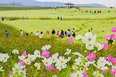 Lễ hội văn hóa Hyoseok tại Pyeongchang Hàn Quốc