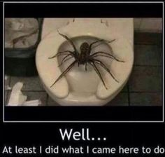 And this isn't the spider talkin'! Where in the hell do they live at for a spider to be that big?!???
