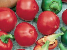 Hot Pepper 'Cherry Hot'