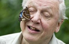 Sir David is the President of Butterfly Conservation since 1998.