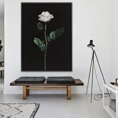 Featuring a striking white single stemmed rose, set against a dramatic black background, this canvas print was originally hand painted by our in-house artist team, and now available as a reproduction stretched and ready-to-hang canvas art piece. Size & frame colour options available. We ship worldwide. #ThePrintEmporium #botanical #floral #art #canvas #rose #wallart #floralart #white #singlerose www.theprintemporium.com.au