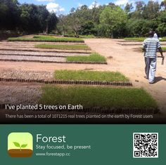 Forest App, Stay Focused, Trees To Plant, Environment, Earth, Outdoor Decor, Plants, Bucket, Celebrity