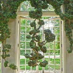 ficus vine topiary... top down The Architect's Eye: Dumbarton Oaks : Architectural Digest